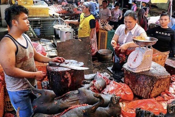 Indonesia markets - জীবন্ত পশুর বাজারগুলোতে বিক্রি হচ্ছে ভাইরাস!